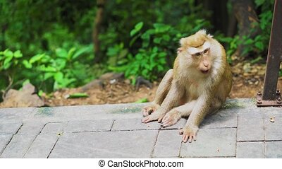the monkey sits in a park in the forest. natural habitats....