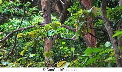 the monkey sits on a tree branch in a rainforest.
