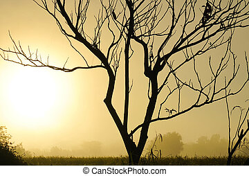 The morning sun silhouettes trees