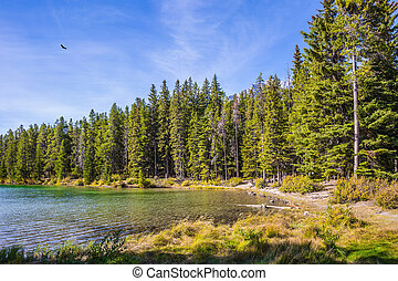 Coniferous forest - The morning sun warms the picturesque...