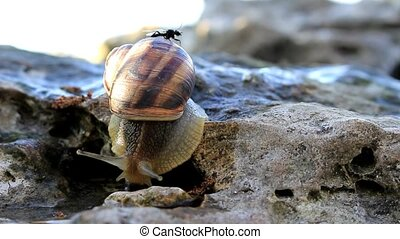 The mosquito sits on the snail - The snail slowly crawls...