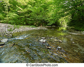 The mountain river in a stony channel flows through a dense green forest.
