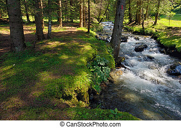 The mountain river in the forest