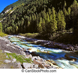 The mountain stream of coniferous forests