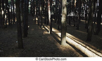 The Movement in the Forest Between Trees. The camera moves...