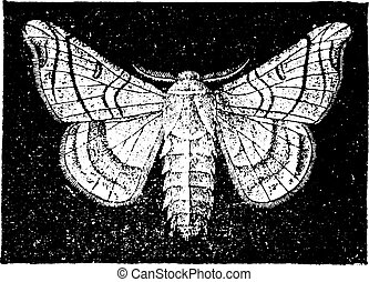 The mulberry silkworm, vintage engraving. - The mulberry...