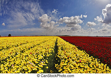 The multi-coloured field flowers buttercups