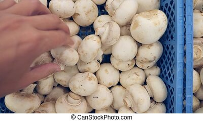 The mushrooms in the basket at the market. close-up of a...