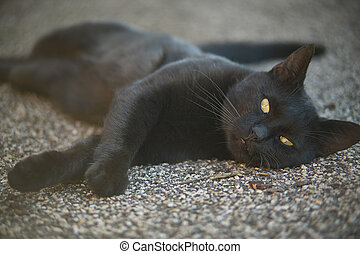 The muzzle of a black cat