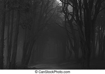 The mystical fog of the Sintra forest