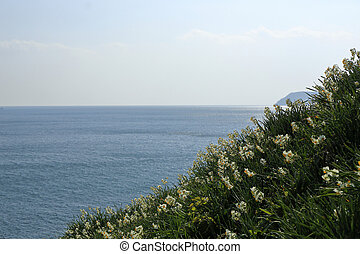 The Narcissus Blooming In The Sea