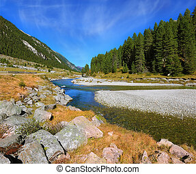 The narrow stream and pine forests