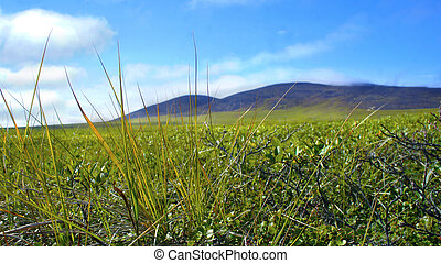 The nature of Chukotka in summer tundra and hills - The...