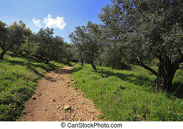 The north of Israel, mountain Meron - Footpath among the...
