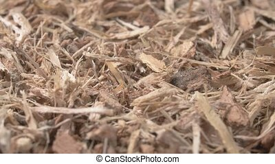 The oak bark is dried. A cure. Medicinal herbs are pharmacy...