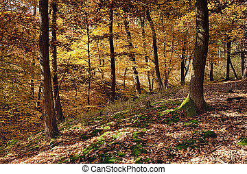 The Oak tree forest