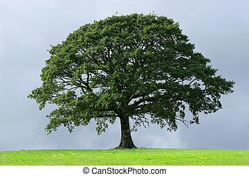 Oak tree in full leaf in summer standing alone in a field against a steel grey stormy sky.