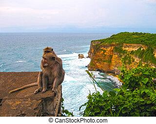 The ocean, waves, monkeys at Uluvatu, Bali - The ocean, ...