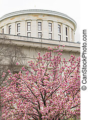 The Ohio Statehouse Cherry Blossoms Blooming Downtown Urban Core of Columbus