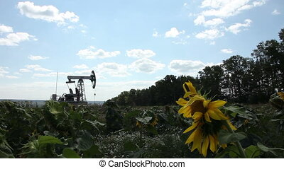 The oil pump in the field
