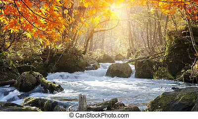 The Oirase Gorge beautiful river druing the autumn season, Japan