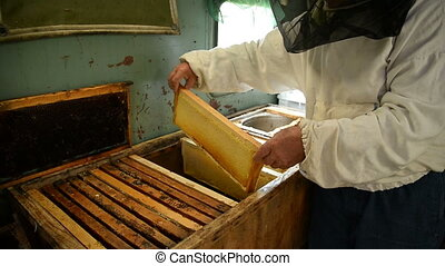 The old beekeeper is holding a frame with honeycomb and...