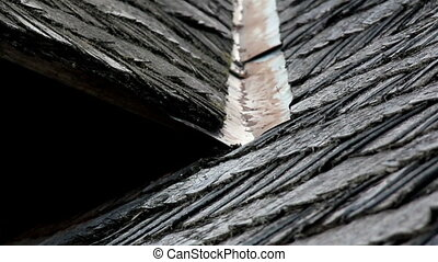 The old cedar wooden shingle shake roof of the house with water tin
