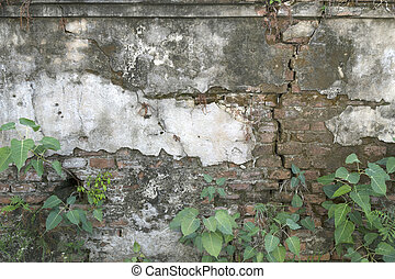 The old cement wall has a small green tree.
