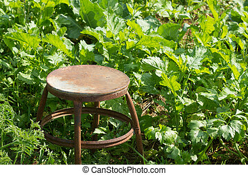 The Old chair in Cabbage's garden.