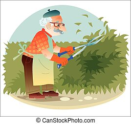 The old gardener working in the garden cutting the bushes....