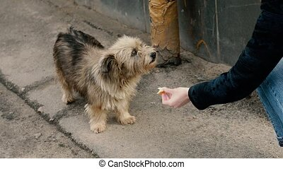 The old homeless dog sniffs a piece of bread.
