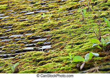 the old roof covered with the moss