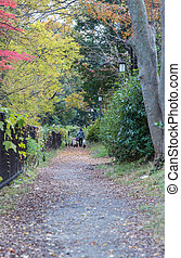 the old woman and group of strayed cat in a park, Japan