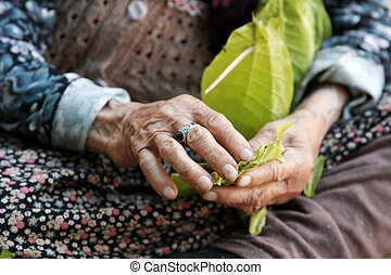 The old woman and tobacco leaves