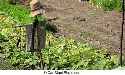 The old wooden lath fence of the ranch and the two scarecrows on a farm and the green plants
