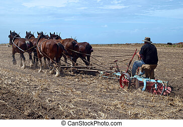 The Oldtimer - An Oldtimer Ploughing the Field with a Six...