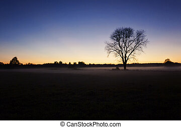 The one tree in the middle of the field