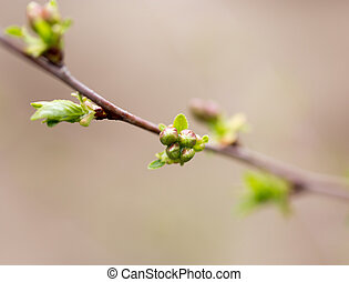 the opened buds on a tree branch