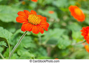 The orange flower in nature