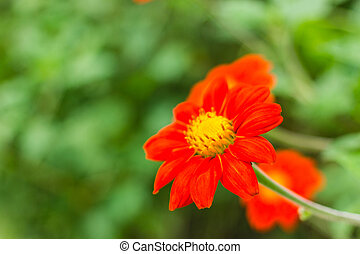 The orange flower in nature