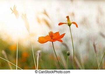 The orange flower in the garden with sunlight