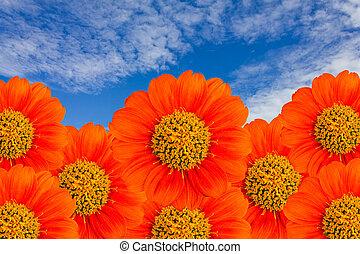 The orange flower with blue sky