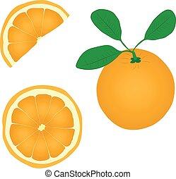 orange fruit vector drawing illustration