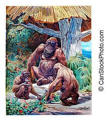 The Orangutan, vintage engraving.