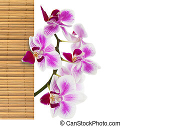 The orchid and bamboo
