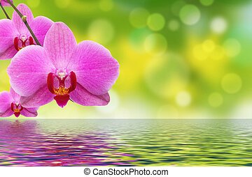 The orchid and water