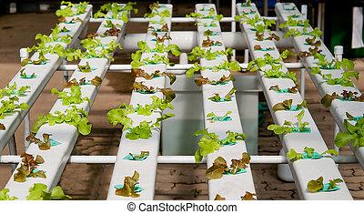 The Organic hydroponic vegetable garden