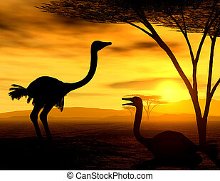 The Ostriches - Illustration of african ostriches