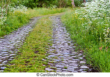 the overgrown old road in the woods, paving the path in the woods