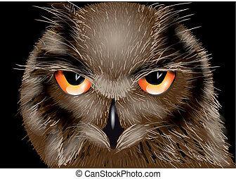 the owl isolated on the black background